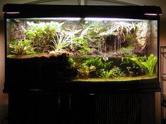 Tim's 72 gallon paludarium                                                                                                                                                                                 More