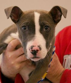 FRANKLIN COUNTY DOG SHELTER & ADOPTION CENTER...OHIO.. .  CLICK LINK TO SEE ALL AVAILABLE ANIMALS... http://www.franklincountydogs.com/adopt/available.cfm?viewAll=1 Pictured: Caroline