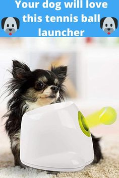 Funny Animal Videos, Cute Funny Animals, Cute Baby Animals, Funny Dogs, Animals And Pets, Tennis Ball Launcher, Cat Dog, Tier Fotos, High Energy