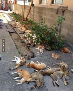 """Let's plant catnip, it prevents mosquitoes."""