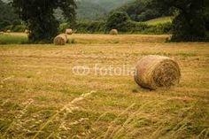 Resultado de imagen para campos cultivados argentino