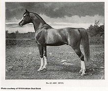 Abu Zeyd, foundation stallion for the Maynesboro Stud founded by William Robinson Brown