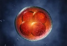Embryo Transfer: 10 Essential Tips for Success