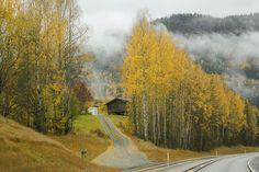Otoño en Noruega 2014. colors Autunm Oslo, Country Roads, Norway, High Road