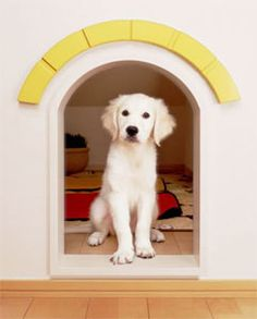 pet-living-dog-space-home  An excellent idea would be to establish a separate area for your dog under the stairs, next to the living room where all the action is. Make it warm and fluffy, almost like a secret hideaway. Arrange a comfortable dog bed and scatter some toys to make it inviting.