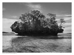 Sebastião Salgado - Genesis Baobab Trees on a mushroom isalnd in Bay of Moramba, Madagascar (2010)