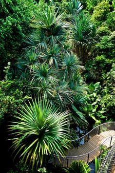 rainforest in zurich by alexanderkohn.deviantart.com on @deviantART