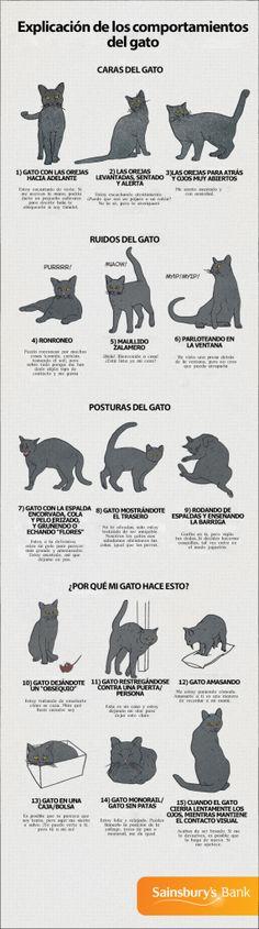 explicacion-de-los-comportamientos-del-gato-y-sus-ruidos-2