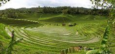 Indahnya hamparan sawah di Bali yang dikelola dengan sistem subak.