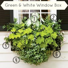 COTTAGE AND VINE: Green and White Window Box Inspiration