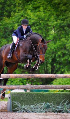 Hunter jumper eventing horse equine grand prix dressage equestrian Please visit BarnGirl.com