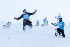 Speight's Dog Derby - Mountain Mayhem at Coronet Peak Ski Resort Winter Festival, Mount Everest, Derby, Skiing, Mountain, Gallery, Dogs, Image, Ski
