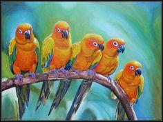 Papegaaien [1600x1200]