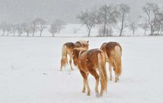 Winter is coming. This poem 'Horses' by Chilean poet and diplomat Pablo Neruda encapsulates the beauty of these animals in this magical season. Berlin Winter, Pablo Neruda, Winter Is Coming, World Cultures, Poet, Mists, Horses, Travel, Animals
