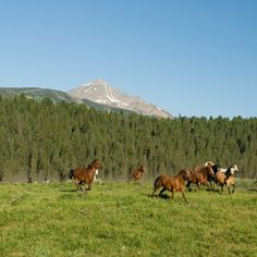 Horses @ Lone Mountain Guest Ranch, Montana, USA