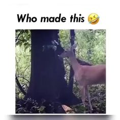 Stupid Funny Memes, Funny Animal Memes, Funny Animal Videos, Cute Funny Animals, Hilarious, Funny Videos, Warrior Cats Art, Funny Clips, Cat Breeds