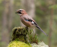 Animals in Vestfossen, Norway (jay ty any comments :) - a photo by Jan Erik Engan