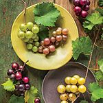 Muscadine Planting Tips - Southern Living