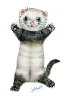 panda ish ferret looks like my Kessler! Animal Paintings, Animal Drawings, Cute Drawings, Cute Baby Animals, Animals And Pets, Funny Animals, Ferret Tattoo, Pet Ferret, Cute Ferrets