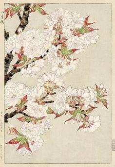 Plum Blossoms, White by Kawarazaki Shodo  (published by Unsodo