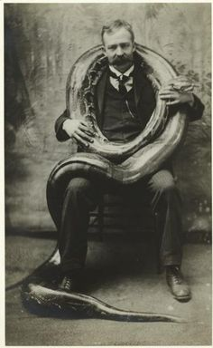 Man with two-hundred-pound boa constrictor.  c. 1906
