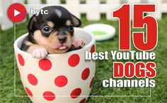 If you're one of those who loves dogs, the videos in Dogs on Best YouTube Channels are for you. Here you will find videos about dog training methods, activities for your four-legged friends, learn about principles of dog nutrition, reviews of the best dogs products. #dogs #dogsofinstagram #dogslover #dogtraining #dogmom #dogtreats #dogstories