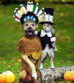 11 Cats in Halloween Costumes