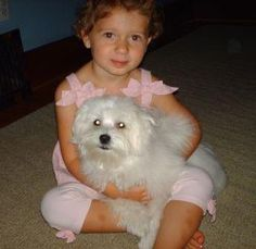Kids love the cute fluffily little Maltese dogs but most breeders won't sell a Maltese to a family with small children as Maltese have very small fragile bones and easily break if dropped.  This is a dog for an adult!