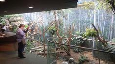 Cleveland Metroparks Zoo - Australian Adventure - Gum Leaf Hideout