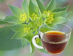 Tea Bupleurum Tea Benefits