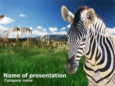 Zebra powerpoint templates and backgrounds free green powerpoint zebra on a green savanna presentation template toneelgroepblik Images