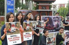 Victory! Animal Sacrifice Banned at Nepal's Gadhimai Festival