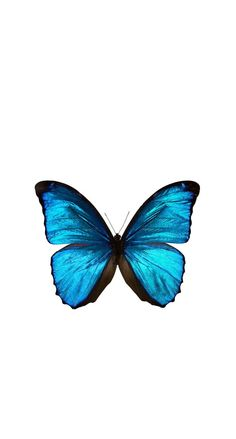 Wallpaper iphone blue wallpapers 33 Ideas for 2019 Butterfly Wallpaper Iphone, Disney Phone Wallpaper, Iphone Background Wallpaper, Diy Wallpaper, Tumblr Wallpaper, Iphone Backgrounds, Pattern Wallpaper Iphone, Aztec Wallpaper, Locked Wallpaper