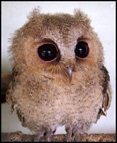 Love owls! lysh33