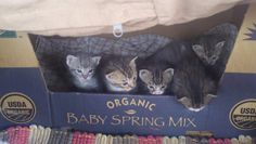 My spring mix of kittens!!