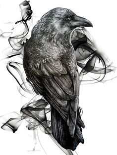 crow drawing - Google Search Más