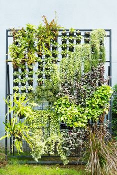 Få bestefar til å lage denne for skjerming på altanen evt. kjøpe et Espaljé Vertical Garden Plants, Herb Garden Planter, Outdoor Plants, Vertical Farming, Colorful Plants, Large Plants, Garden Projects, Garden Tools, Fall Planters