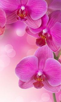 Earth Orchid Flowers Mobile Wallpaper Pink Wallpaper Iphone Orchid Wallpaper Nature Iphone Wallpaper
