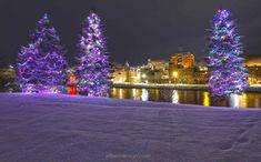 My Town, Maine, Christmas Tree, Holiday Decor, Teal Christmas Tree, Xmas Trees, Christmas Trees, Xmas Tree