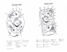 202 Best Plant Cell School Project Images Science Classroom