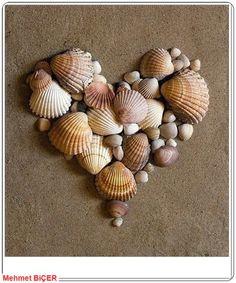 Kalp şeklinde dizilmiş deniz kabukları