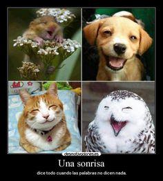 carteles sonrisa sonriendole vida desmotivaciones