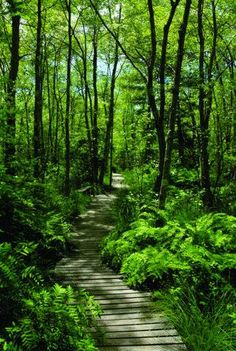 Moose Hill Wildlife Sanctuary is Massachusetts best kept secret. Filled with gorgeous greenery, amazing wildlife and a pretty great boardwalk trail, you'll want to visit this one in every season.