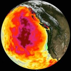 The Weather Network - Pacific Blob behind the death of millions of birds Wildlife Biologist, Coral Bleaching, Kelp Forest, Marine Ecosystem, Weather Network, Types Of Fish, Sea Birds, All The Way Down, Bird Species