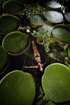 Victoriana lilypads, Ventnor Botanic Garden, U.K.  #water_garden #pond #myt