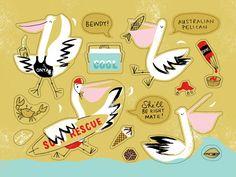 Australian Pelican illustration