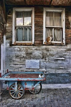Cats of Istanbul - ...