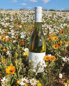 Dreamy days... . Stop savour & sip at @klawerwyn on your flower route roadtrip. Conveniently located on the N7 just outside Klawer . . . . #visitnwc #discoverctwc #weskus #westcoastwineroute #wedotourism #visitsawinelands #thisissouthafrica #traveltoday #weareopen #instagram_sa @weskustourism @visitsawinelands @discoverctwc West Coast, The Outsiders, Road Trip, Wine, Day, Flowers, Travel, Instagram, Viajes