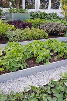 Raised Beds Edible Landscaping: vegetable garden | jardin potager | bauerngarten | köksträdgård