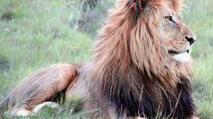 Petición · South African Airways: Poned fin al transporte de trofeos de animales salvajes en vuestros aviones · Change.org